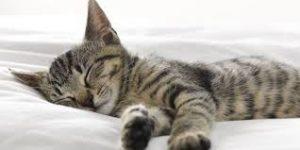 quante ore dormire per notte