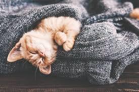 dormire sul divano di notte