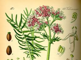 pastiglie di valeriana