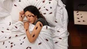cosa significa sognare scarafaggi 2