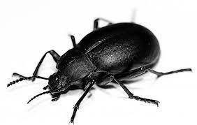 cosa significa sognare scarafaggi