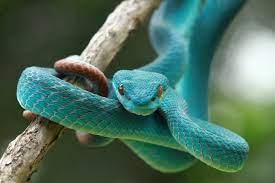 cosa significa sognare serpenti