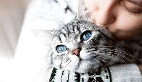 sognare gatto