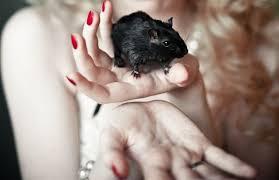 sognare un topo